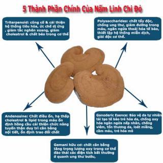 Công dụng và cách dùng của nấm linh chi
